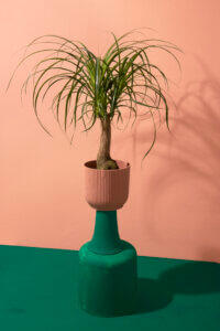 WePlant pink green