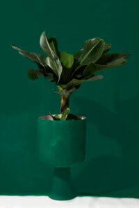 WePlant donker groen