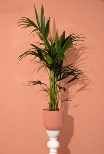 weplant palm